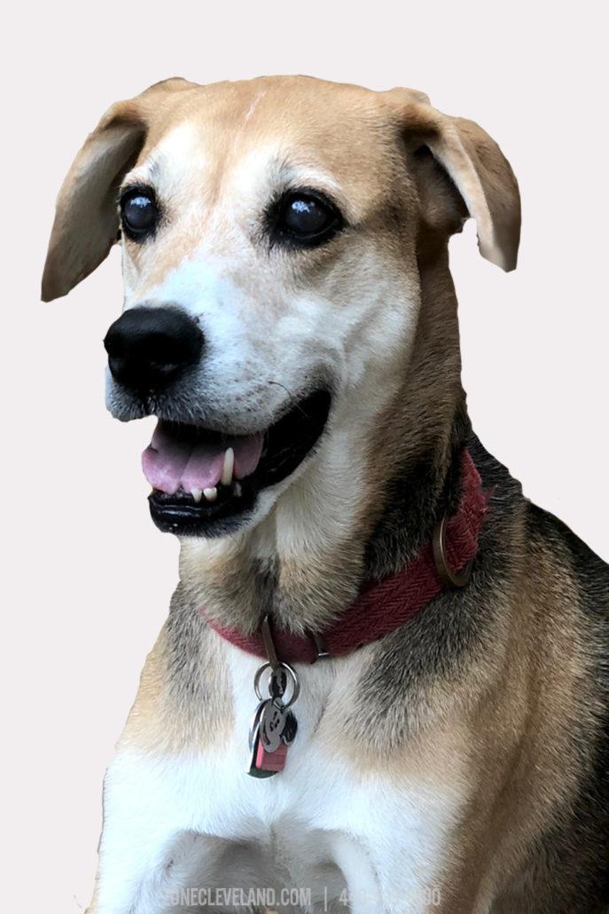 Lilo The Dog